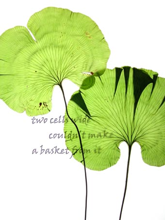 fern poem